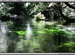 次の記事:清水川
