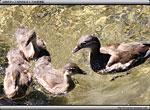 次の記事:明神池のかわいい親子