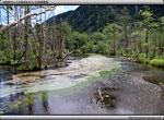 次の記事:岳沢口湿原