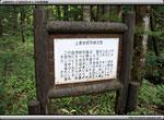 自然研究路〜上高地 2010 夏