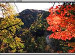 次の記事:紅葉と黄葉、褐葉