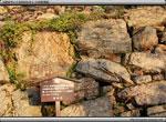 次の記事:浜松城の石垣