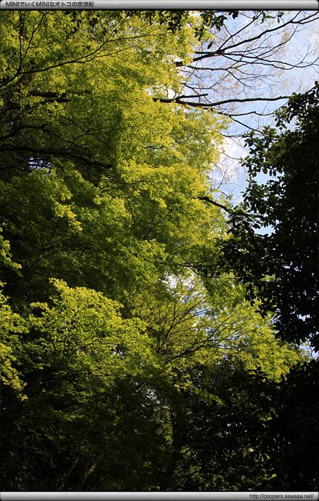 上野公園の緑