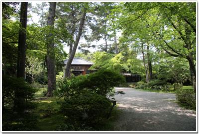 岡崎公園の緑
