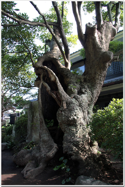 長谷寺の木々