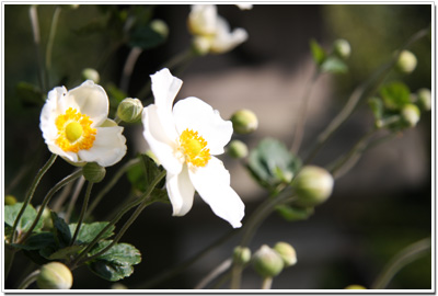 長谷寺の花々