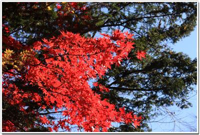 金谷ホテル周辺の紅葉