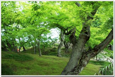後楽園の新緑