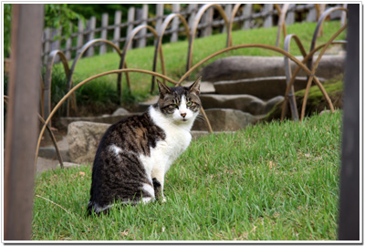 後楽園ネコ
