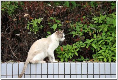 広島市民球場ネコ001