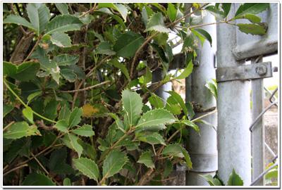 警戒心バリバリの広島城ネコ