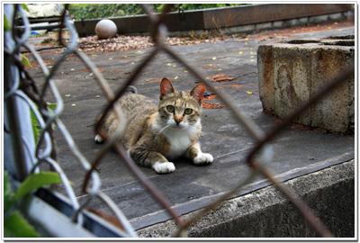 まだビビっている様子の広島城ネコ