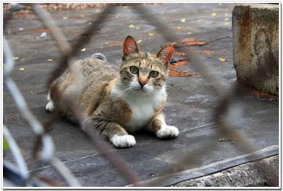 だいぶ警戒心がやわらいだ広島城ネコ