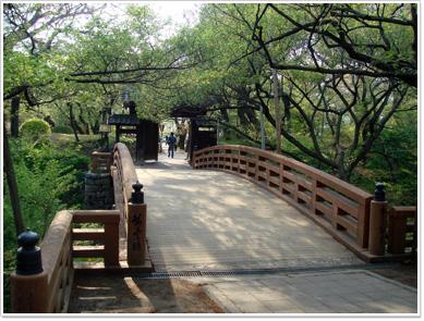 高遠城の桜雲橋