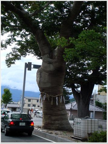 松本神社の大欅