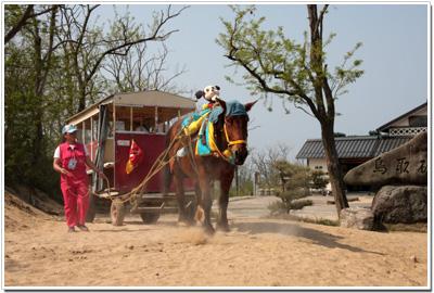 鳥取砂丘で活躍する馬車