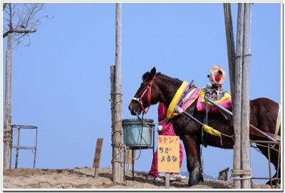 鳥取砂丘で生きる馬