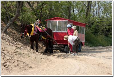 鳥取砂丘で働く馬