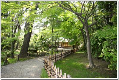 名古屋城の新緑