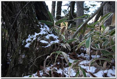 竜頭之滝の雪