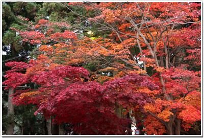日光駅前の紅葉