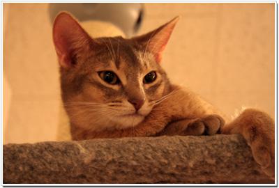 JaLaLaの猫たち001