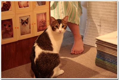 JaLaLaの猫たち002