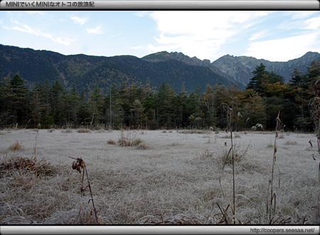 霜で白く化粧された田代湿原