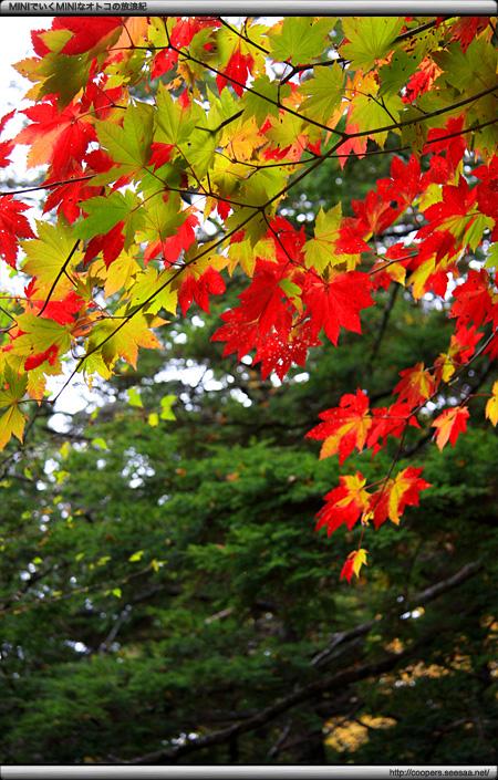 上高地の黄葉と紅葉