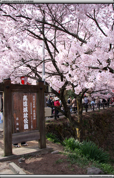 天下第一の桜〜高遠の桜